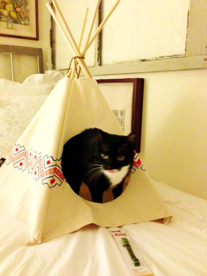 Then it was time for birthday gifts! Along with a new collar and mermaid-shaped tag, I got Batman a cat tipi!