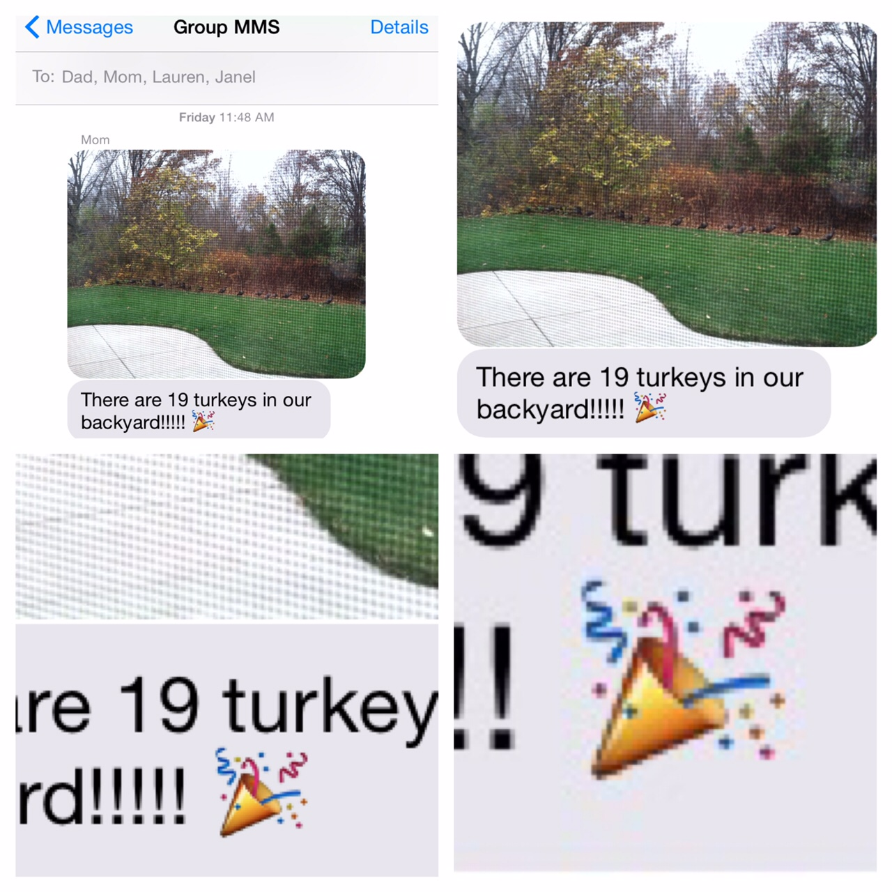 19 turkeys